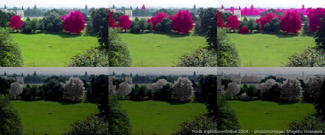 Photomontage 2004, Forêt à photosynthèse